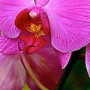 Orquideas Poster