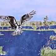 Osprey At Tuttle Marsh Poster