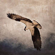 Osprey Over The Columbia River Poster
