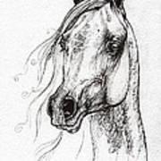 Ostragon Polish Arabian Horse 3 Poster