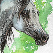 Ostragon Polish Arabian Horse Painting 1 Poster