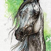 Ostragon Polish Arabian Horse Painting   Poster