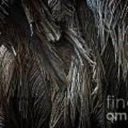 Ostrich Feather Texture Poster