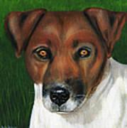 Otis Jack Russell Terrier Poster