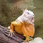 Out Of Africa Orange Lizard 1 Poster