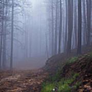 Out Of The Mist - Casper Mountain - Casper Wyoming Poster