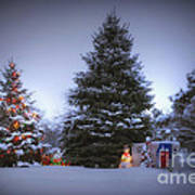 Outdoor Christmas Tree Poster