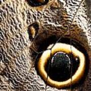 Owl Butterfly Wing Poster