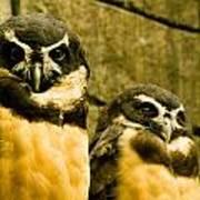 Owl I Poster