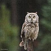 Owl In The Forest Visits Poster