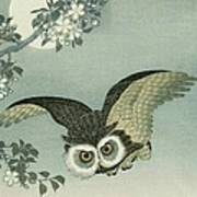 Owl - Moon - Cherry Blossoms Poster