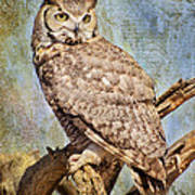Owl On A Tree Poster