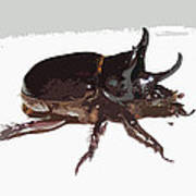 Ox Beetle Abstract Poster