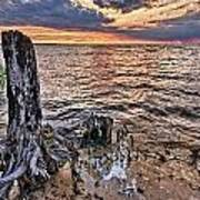 Oyster Bay Stump Sunset Poster