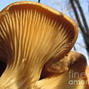 Oyster Mushroom Macro Poster