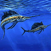 Pacific Sailfish Poster