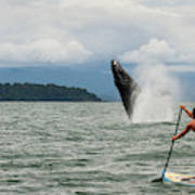 Paddle Boarders And Humpback Whale Poster
