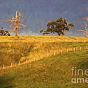 Paddock with dead trees at sunset Poster