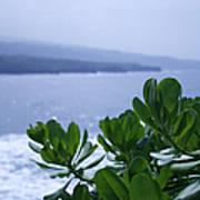 Pailoa Near Mokulehua At Hale 'o Pi'ilani Heiau Maui Hawaii Poster