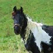 Paint Horse In Field Poster