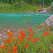 Paintbrush By Bow River In Banff Np-ab Poster