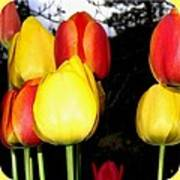 Painted Country Tulips Poster