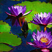 Painted Purple Water Lilies Poster