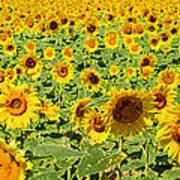 Painted Sunflower Field Poster
