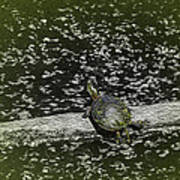 Painted Turtle Sleeping Like A Log Poster