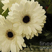 Painted White Flowers Poster