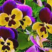Painterly Purple Pansy Poster