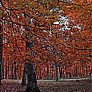 Painterly Style Autumn Trees Poster