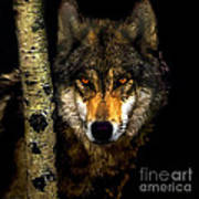 Painting ... Wolf In Aspen Grove Poster