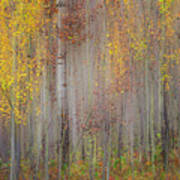 Painting Of Trees In A Forest In Autumn Poster