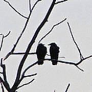 Pair Of Birds In Black Poster