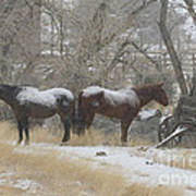 Pair Of Horses In A Snow Storm   #0559 Poster