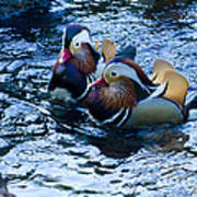 Pair Of Male Mandarin Duck-signed-#8236 Poster