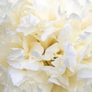 Pale Peony Poster