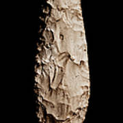 Paleolithic Tool 2 No Text Poster