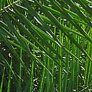 Palm Crosshatch Poster