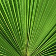 Palm Fan Design Poster