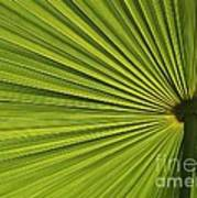 Palm Fron Abstract Poster
