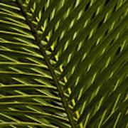 Palm Frond Patterns Poster