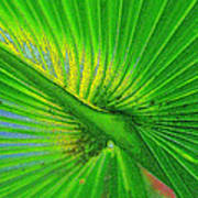 Palm Frond Work A Poster