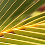 Palm Fronds Poster