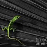 Palm Leaf Lizard Poster