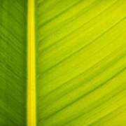 Palm Leaf Macro Abstract Poster