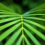 Palm Leaf Pattern Poster