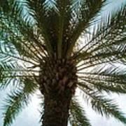 Palm Light Poster