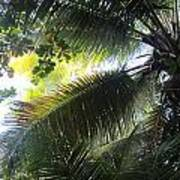 Palm Pattern 1 Poster